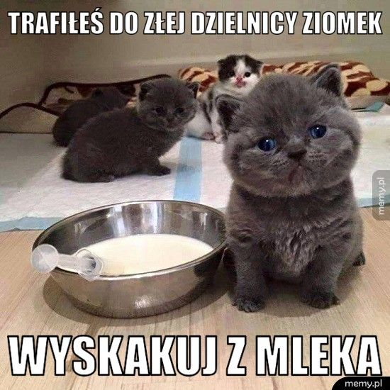 Groźny kotek