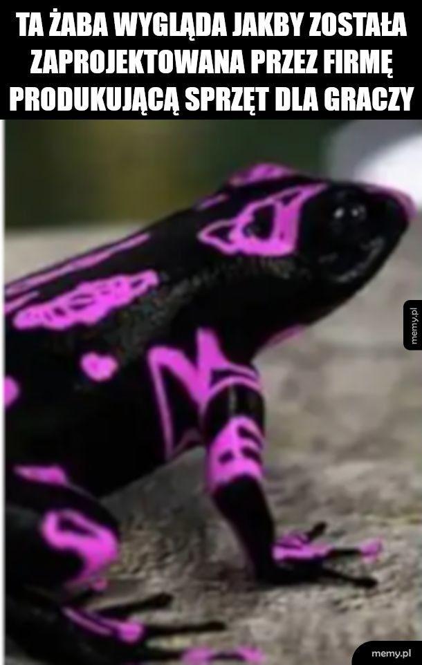Żabson
