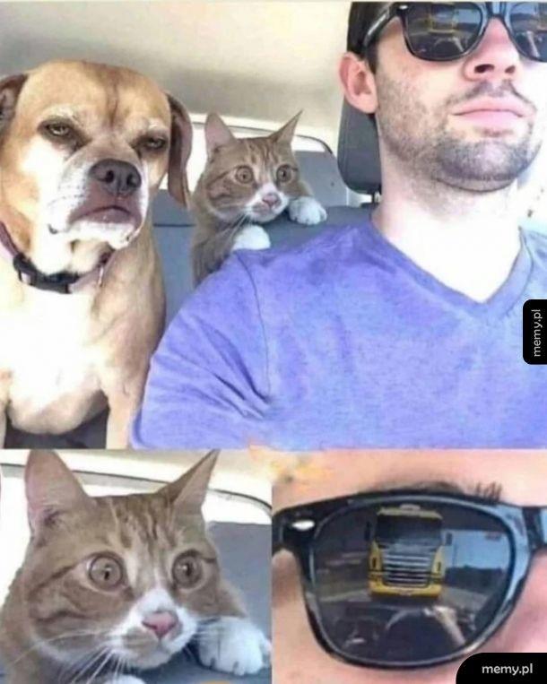 Przerażony koteł