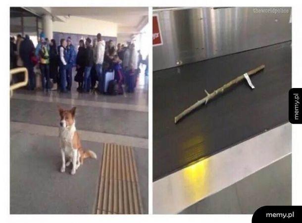 Psi bagaż