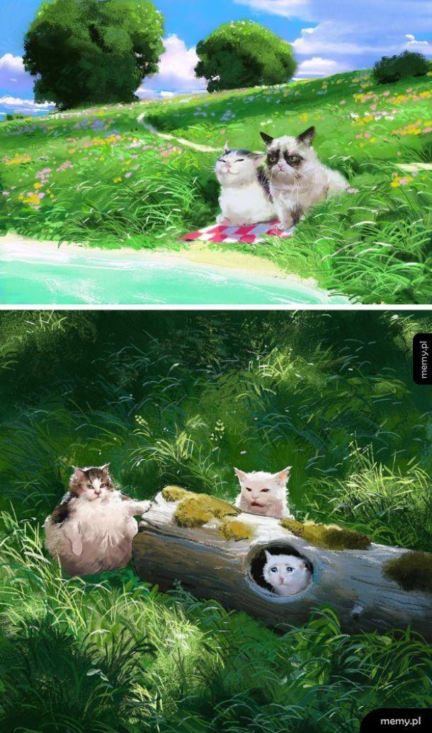 Kotki z internetu na łące