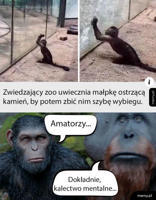 Ewolucja puka do drzwi...