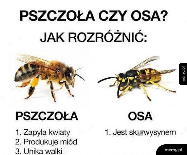 Pszczoła czy osa