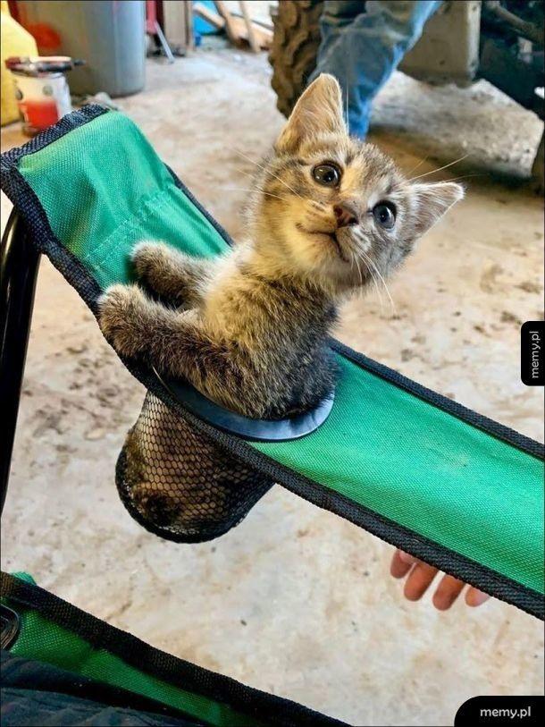 Fotelik z miejscem na kotka