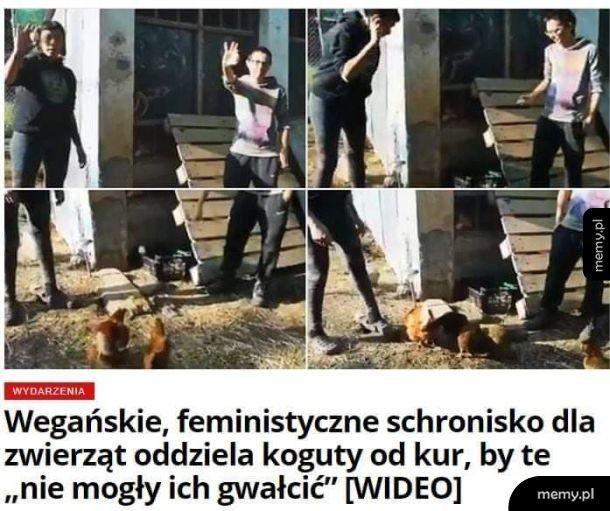 Co te feministki