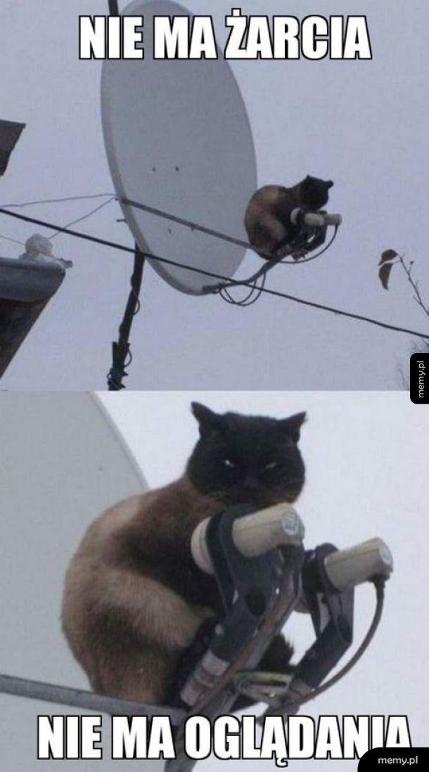 Kot zadecydował