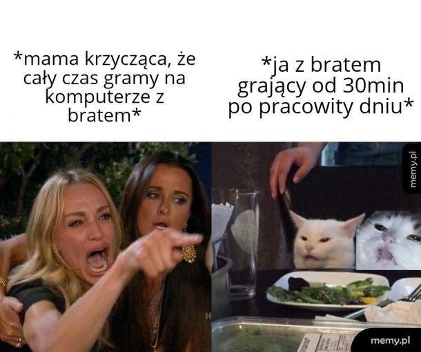 Bracia koty