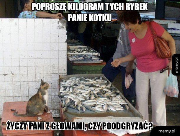 Pan kotek sprzedawca na targu
