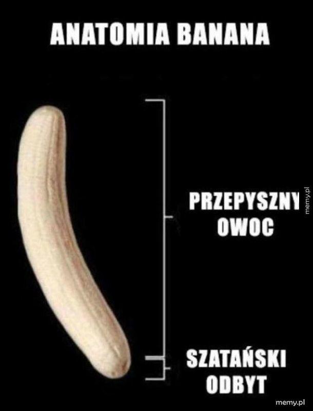 Lekcja anatomii