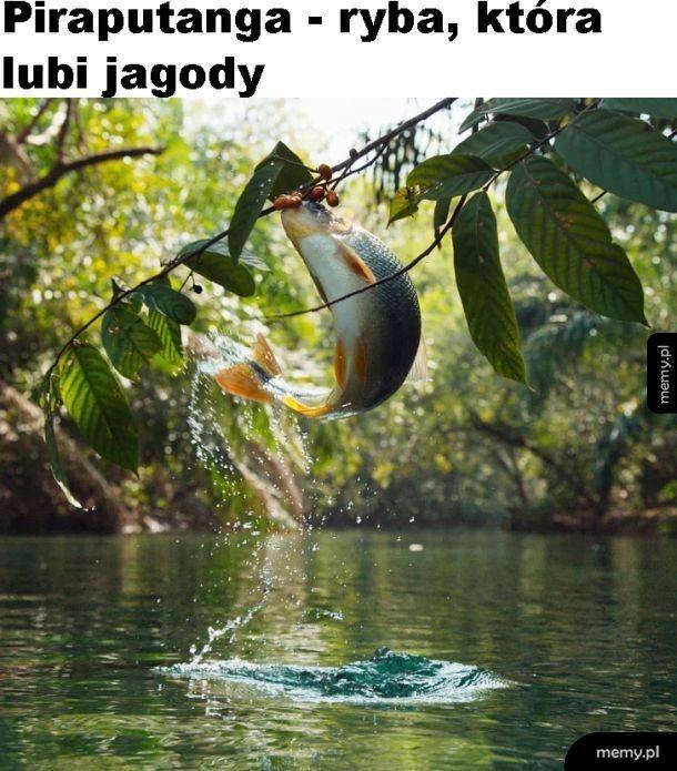 Niezwykła ryba