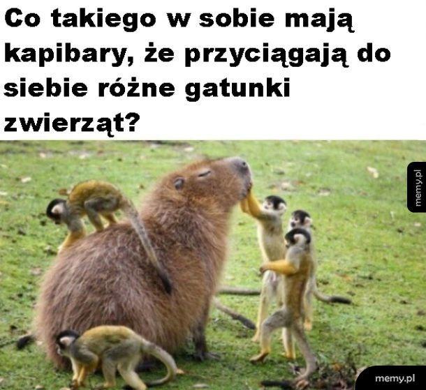 Kapibary
