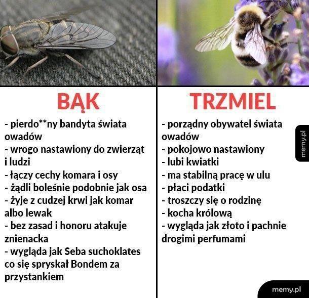 Bąk vs Trzmiel