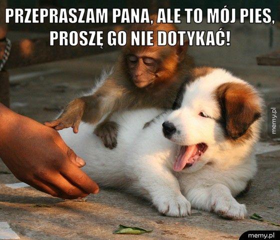 przepraszam pana, ale to mój pies, proszę go nie dotykać!