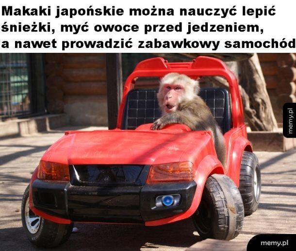 Makaki