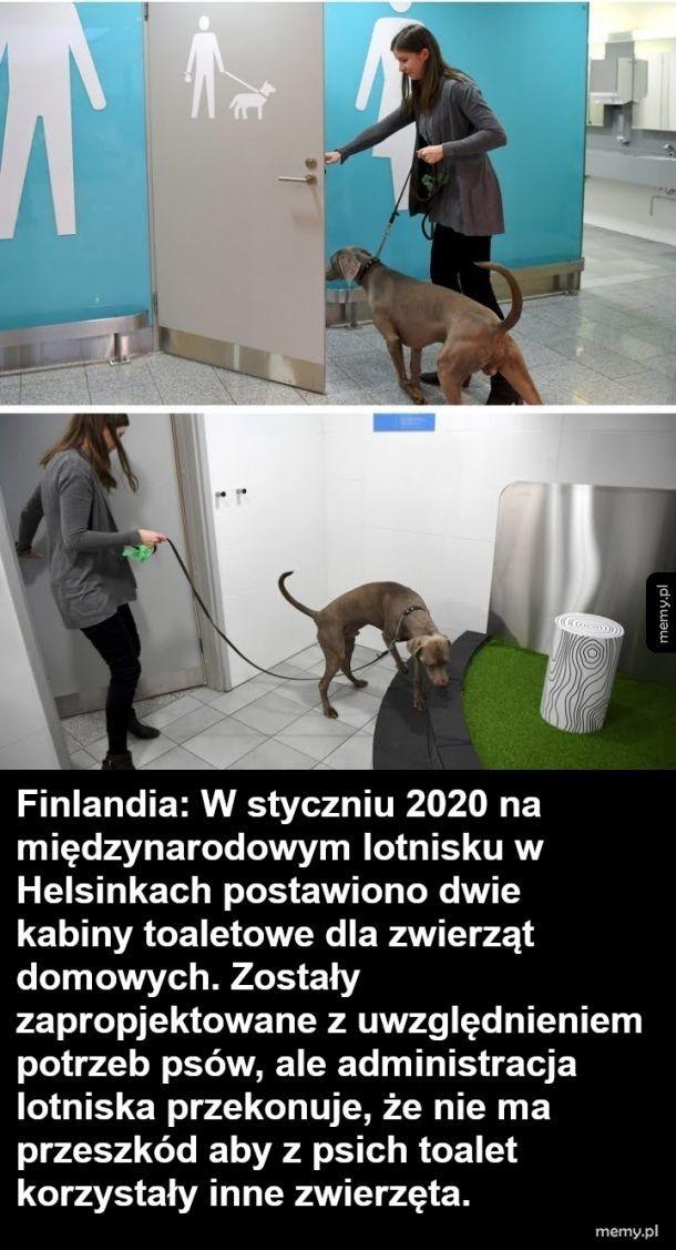 Toalety dla psów