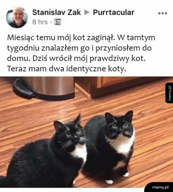 Znaleziony kotek