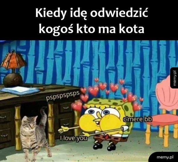 Kocham kotki