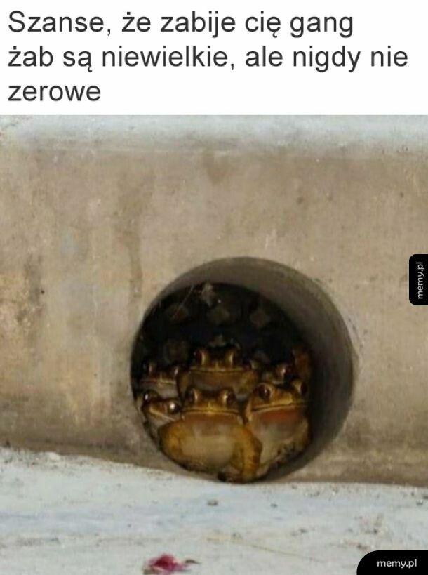 Gang żab