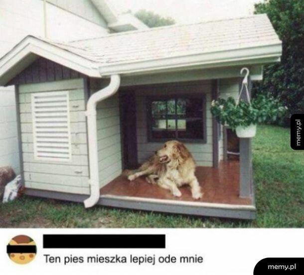 Pies ma lepiej
