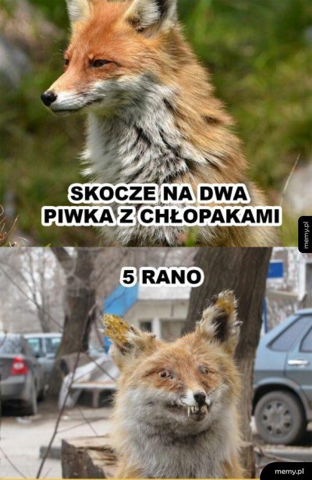 2 piwka