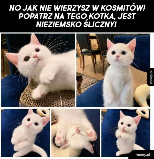 Śliczny kotek