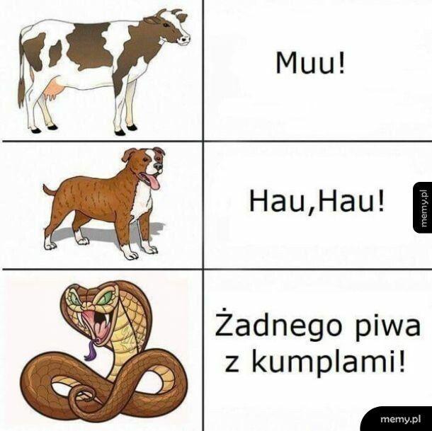 Rodzaje zwierząt