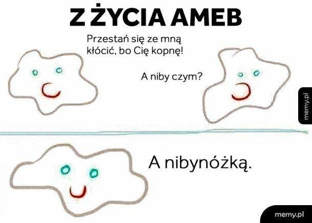 Ameby
