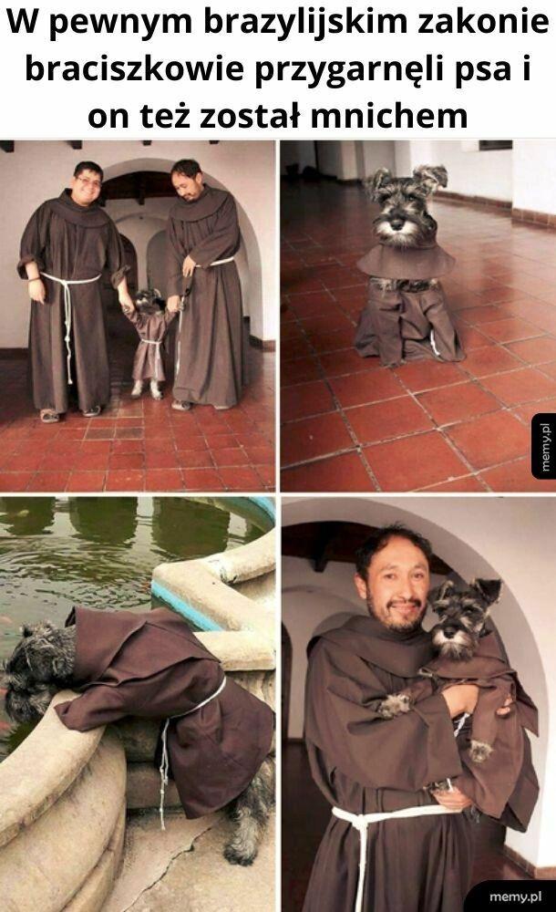 Pieseł mnich