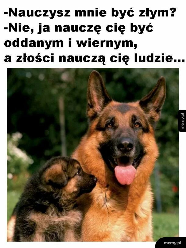 Rozmowa psów
