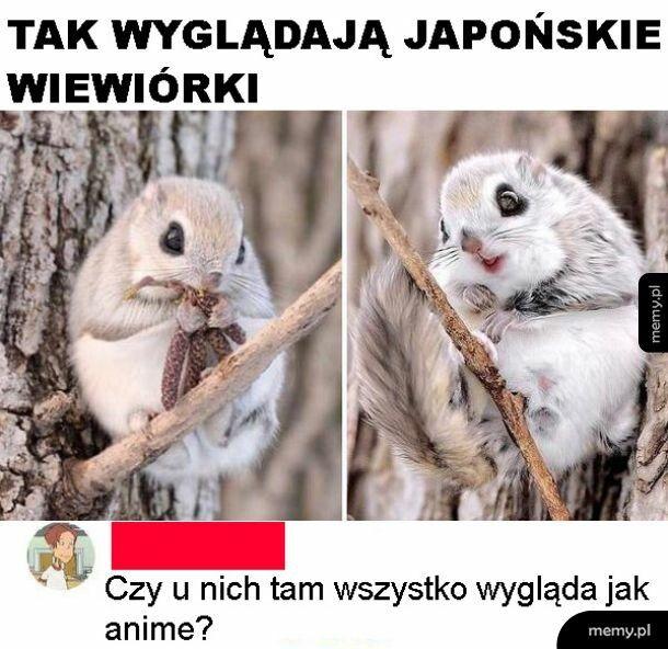 Wiewórka