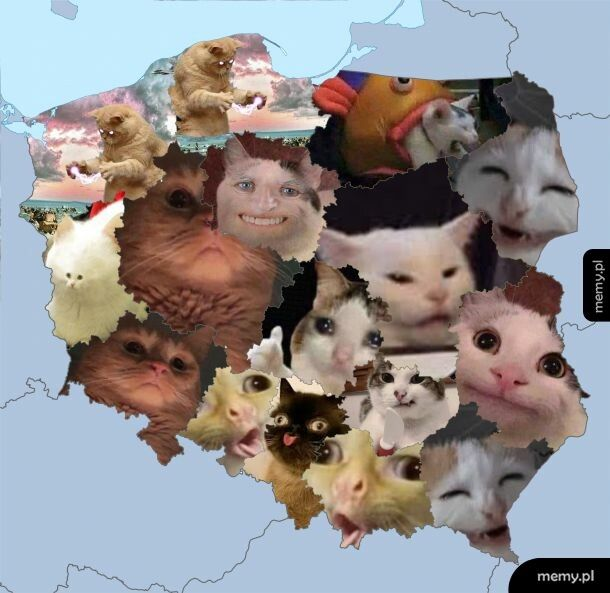 Polska jako kotki