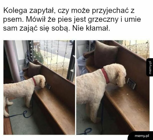 Pies jak dziecko