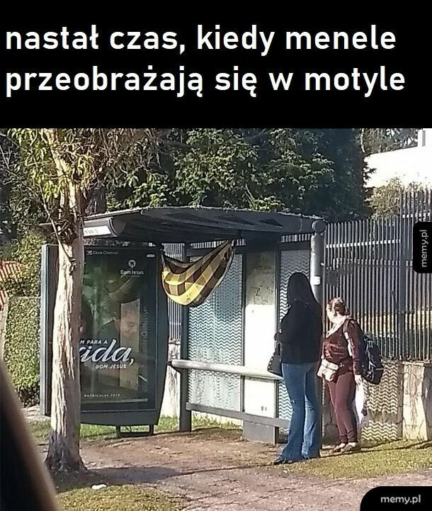 Kokonik bezdomnego