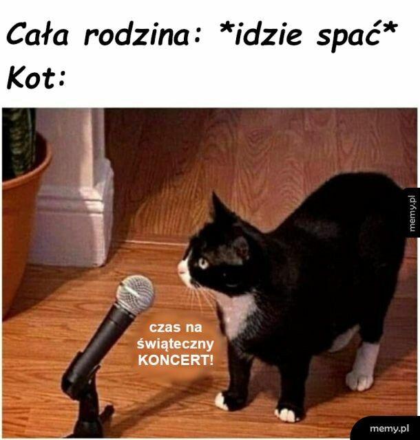 Kocia muzyka