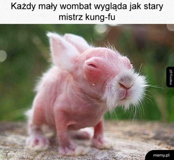 Mały wombat