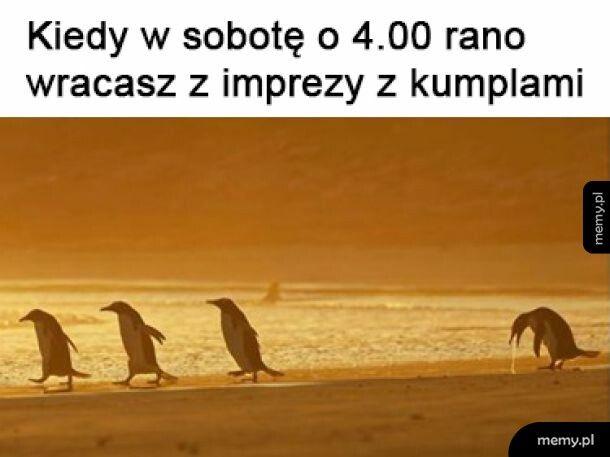 Pingwin po imprezie