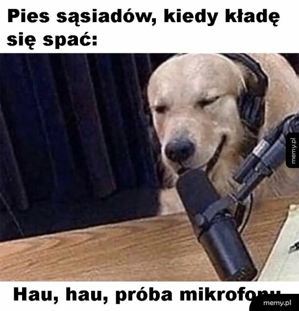 Pies sąsiada