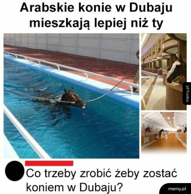 Arabskie konie