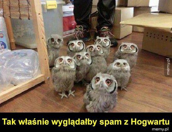 Spam z Hogwartu