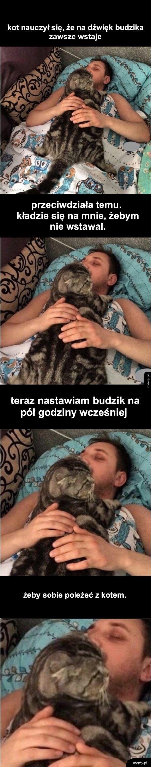 Kocie spanko