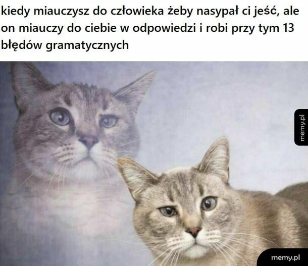 Miau miau miau miau
