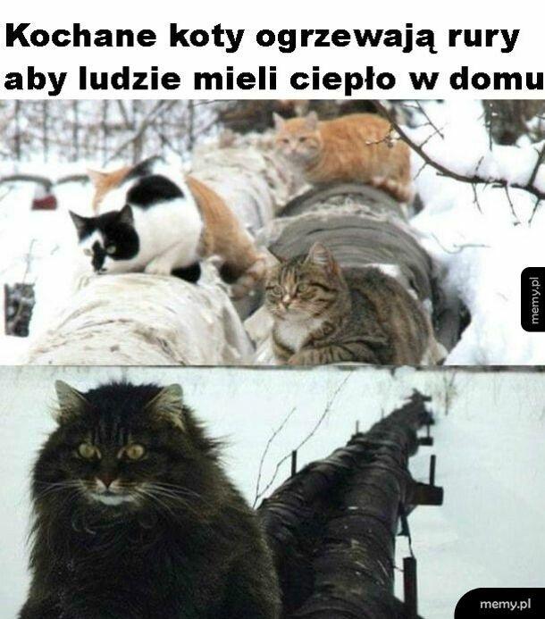 Kochane kotki