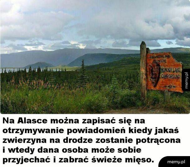 Surowa Alaska