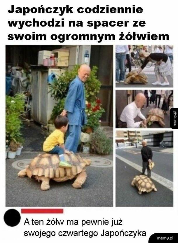 Długowieczny żółw