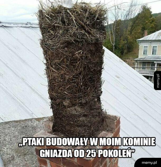 Gniazdo w kominie