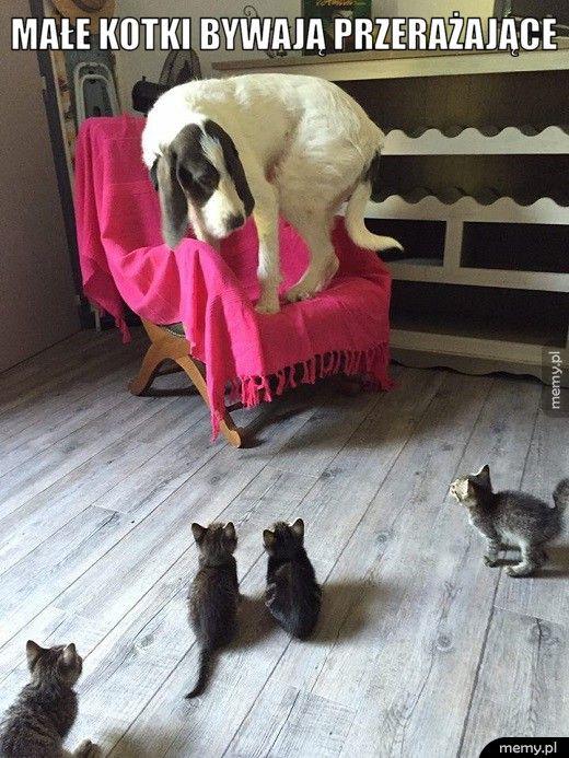 Kotki bywają przerażające.