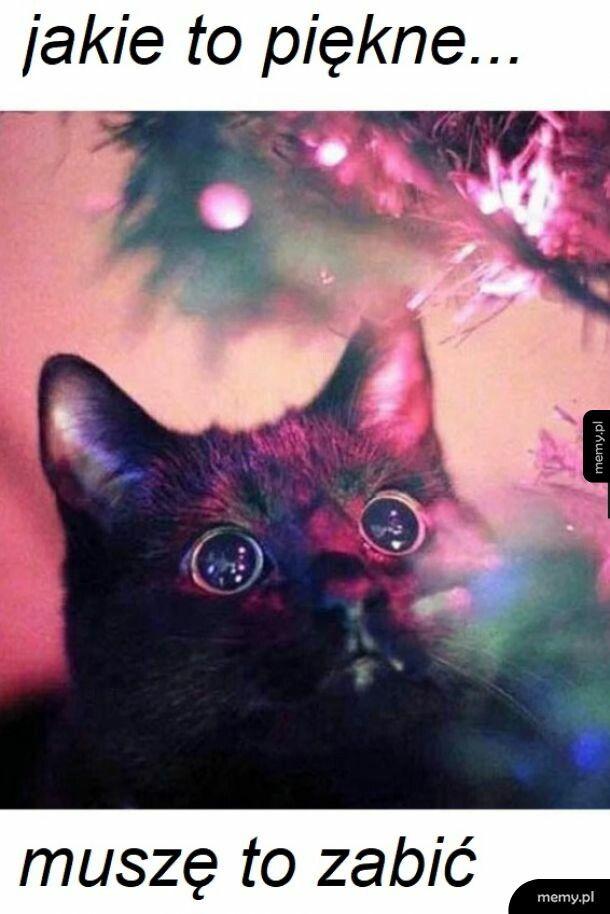 Każdy kot be like