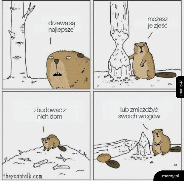Drzewa są the best
