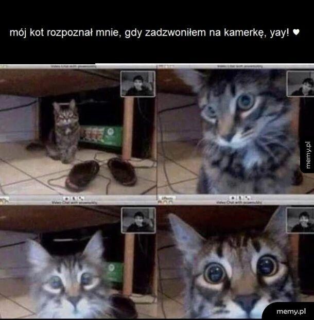 Mój kotek mądry jest jak ja !