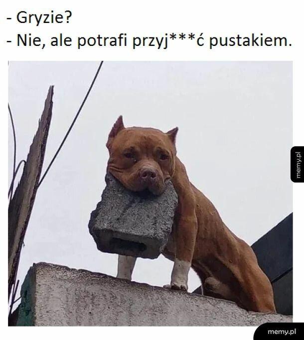 Dobra psinka